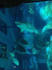 Shark Attack !